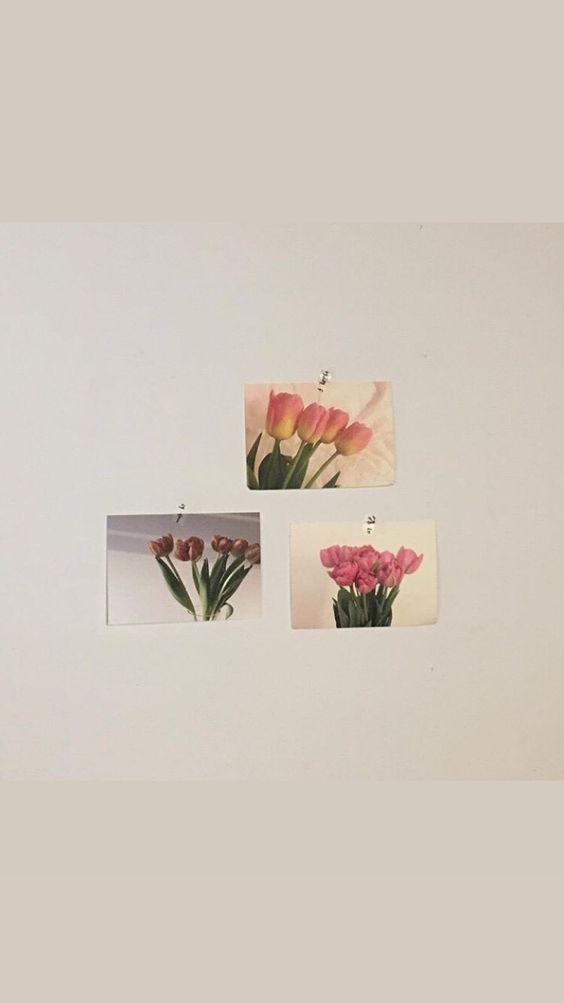 极简系:【韩风WALLPAPER · 室内实景桌布】INS风郁金香卡片墙面装饰