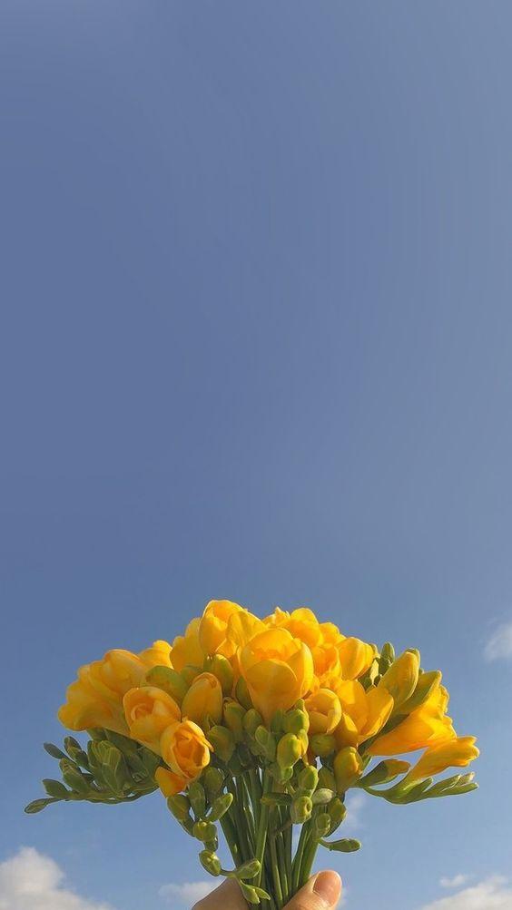 ✨ 唯美系:【韩风WALLPAPER · 花卉桌布】INS风黄色郁金香花束