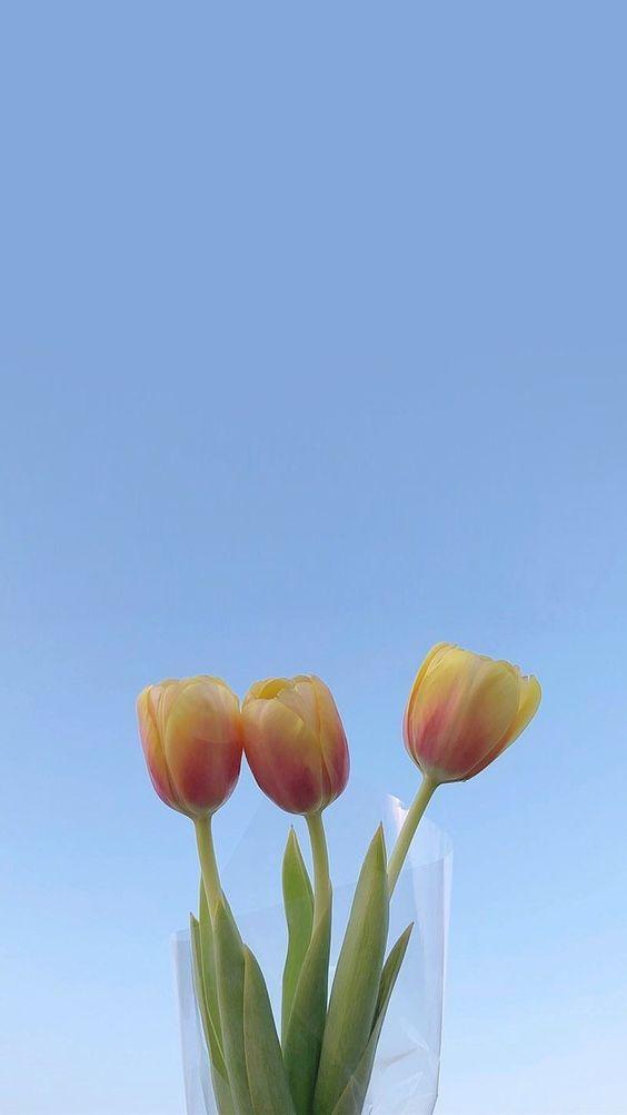 ✨ 韩系意境风格手机Wallpaper · 治愈系小角落、花束| 各种家居室内或Cafe小角落都是超唯美风景 ❤️ 美美的花束桌布也好好看呢~