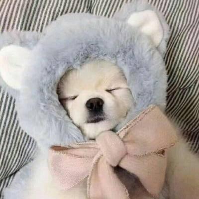 狗狗睡觉系列 周末就要像汪汪们一样赖在床上睡饱饱~慵懒耍废、躺在温暖被窝里睡觉的幸福汪汪们,根本就是狗(人)生(间)理想啊!